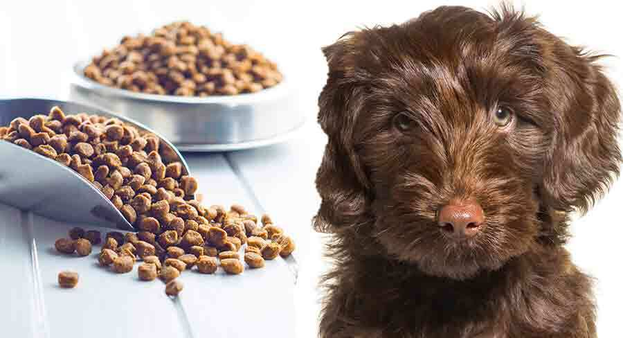 feeding your labradoodle puppy