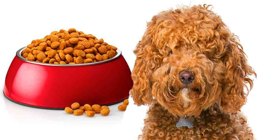 how to feed a labradoodle