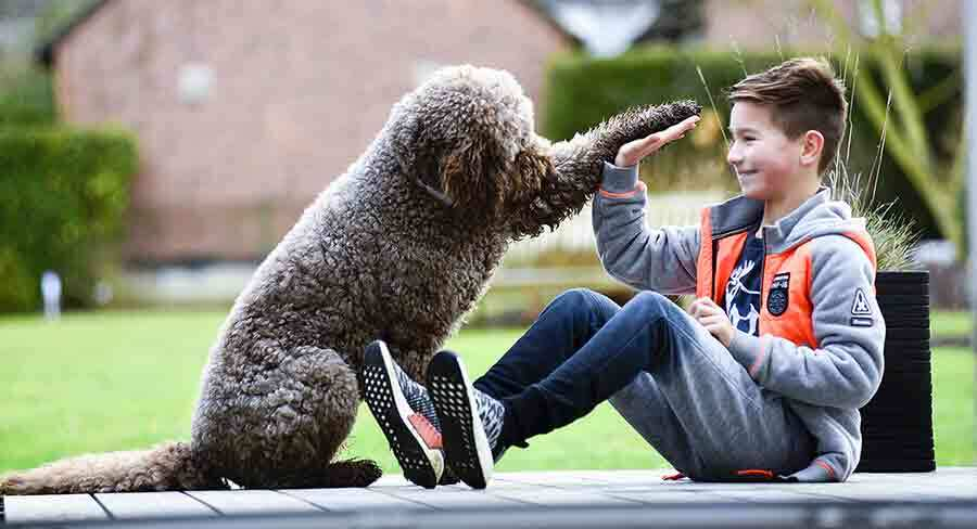 are labradoodles good with kids