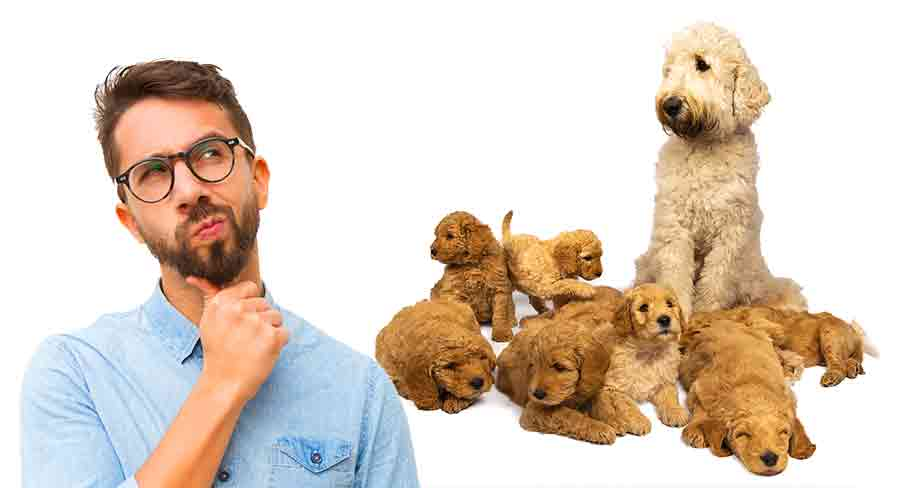 when can labradoodle puppies leave their mother